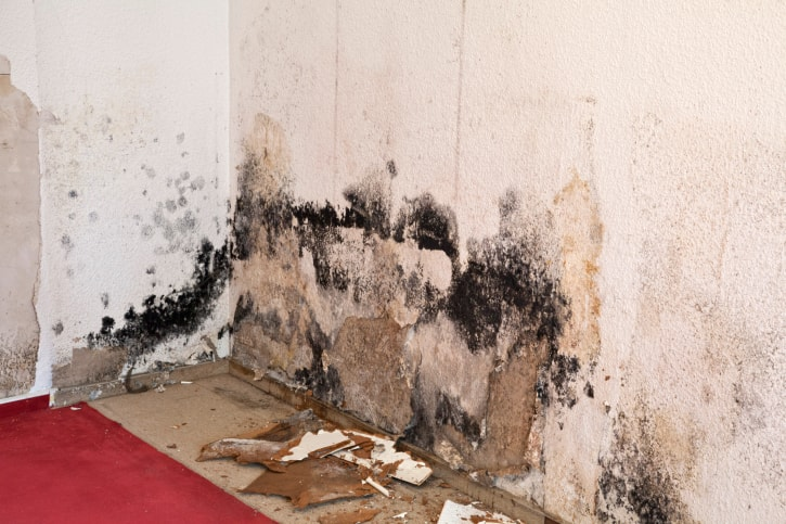 Mold In Bathroom Landlord Responsibility what landlords need to know about mold in rental properties